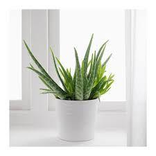 9 plantes pour purifier l 39 air de votre maison. Black Bedroom Furniture Sets. Home Design Ideas